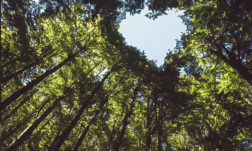 Reforestation & emplois